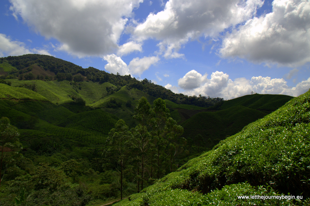 Cameron Highland tea plantation
