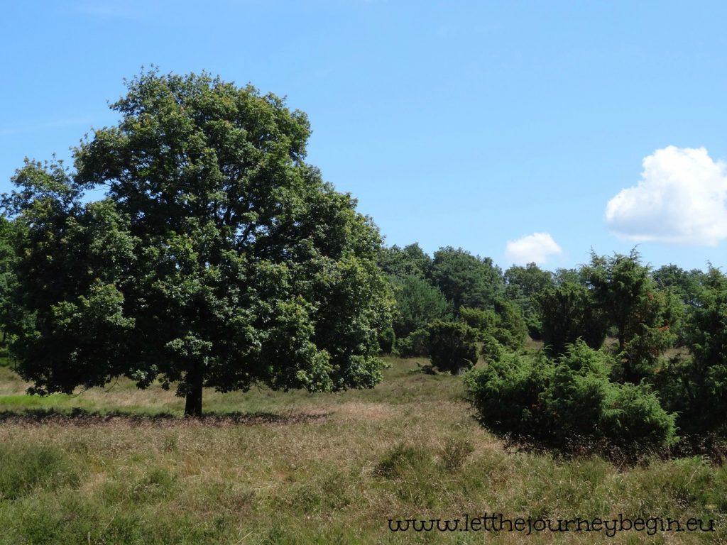 The heath landscape