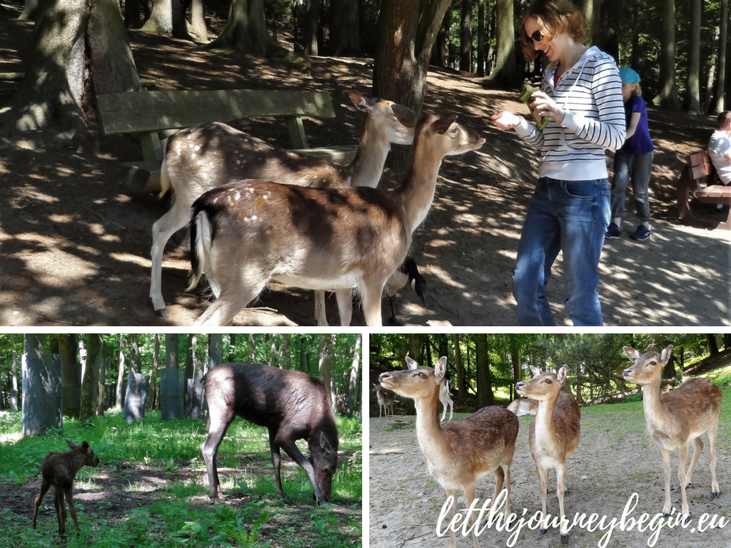 Family staycation in Hamburg - Wildpark Schwarze Berge